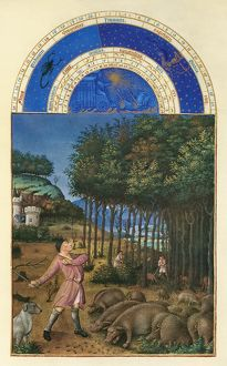 medieval/acorn harvest november illumination 15th century