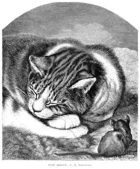 CAT & MOUSE. /n'Puss Asleep.' Wood engraving, English, late 19th century.