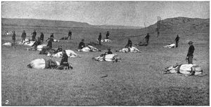 CAVALRY DRILL, 1890. Troops with the U