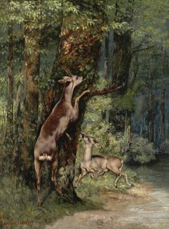 COURBET: DEER, 1868. 'Deer in the Forest.' Oil on canvas, Gustave Courbet, 1868