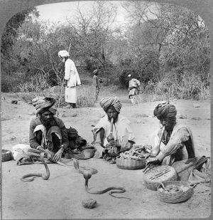 DELHI: SNAKE CHARMERS. Snake charmers handling the hooded cobra, Delhi, India, stereograph