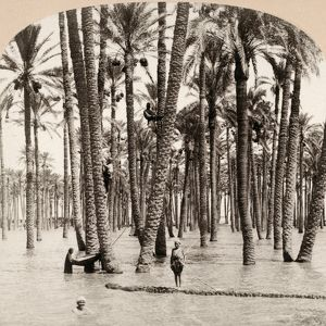 EGYPT: FLOOD, c1898. A flood of the Nile River in Cairo, Egypt. Stereograph, c1898