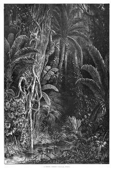 FOREST, 1872. 'A Tropic Forest.' Engraving by Granville Perkins, 1872