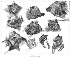 GERICAULT: CATS. /nStudies of cats. Line engraving after a pencil drawing by Theodore Gericault