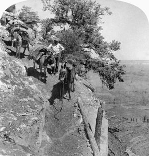GRAND CANYON, 1903. A man with a horse and two pack mules on the Grand View Trail