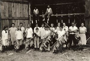 HINE: TOBACCO FARM, 1917. A group of young shed workers at Wetstone Tobacco Farm in Vernon