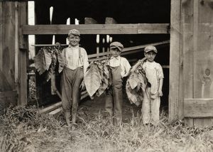 HINE: TOBACCO FARM, 1917. An eleven year-old boy with two nine year-old boys drying
