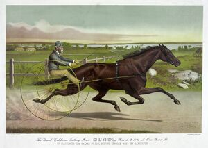 HORSE RACING, c1890. 'The Grand California Trotting Mare Sunol