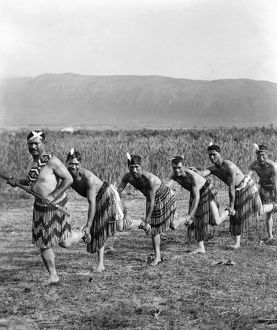MAORI: WAR DANCE. Five Maori men posing in traditional clothing doing a war dance