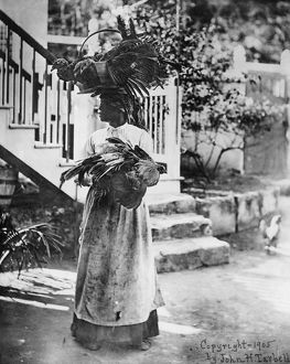PORTRAIT: WOMAN. An African American woman carrying chickens and turkeys to market
