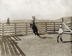 TEXAS: COWBOY, c1907. A cowboy breaking a horse in a corral on the LS Ranch in Texas