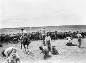 TEXAS: COWBOYS, c1904. A group of cowboys branding cattle on a ranch in Texas. Photograph