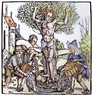 TREE OF LIFE, 1515. Yggdrasil, the Tree of Life in Norse-Teutonic mythology. Woodcut
