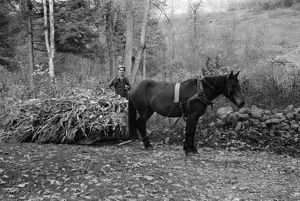 VIRGINIA: CORN, 1935. A man hauling a load of cornstalks in Shenandoah National Park