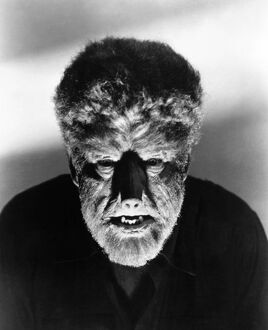 WOLFMAN, 1941. Lon Chaney, Jr., in the title role of 'The Wolfman,' 1941.